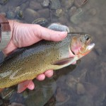 idaho cutts 049